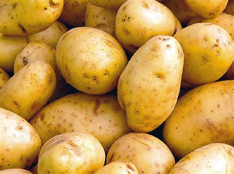 pomme de terre en chambre pomme de terre fait grossir ou perdre du poids