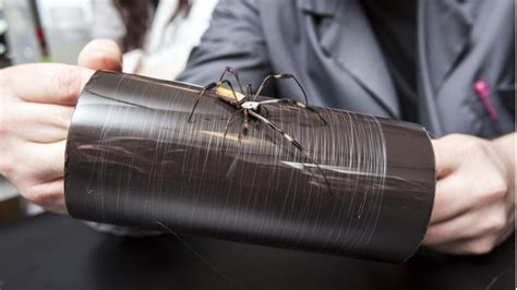 spider silk  bullet stopping plane catching fabric    fashion world spinning