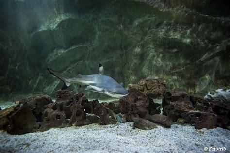 l aquarium de vannes animations 224 l aquarium de vannes dans le morbihan