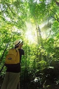 Trekking, Elephant experiences, Canoeing, Tubing, Bamboo ...