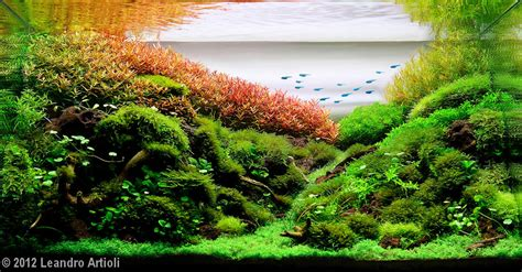 aquascape gallery 2012 aga aquascaping contest 377