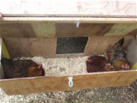 chicken nest boxes   access