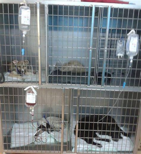 hospitalizacion centro veterinario animalia