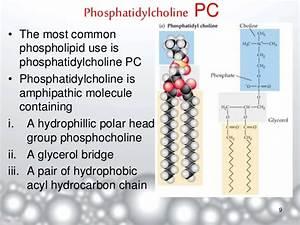 Liposomes- A Novel Drug Delivery System  Phosphatidylcholine