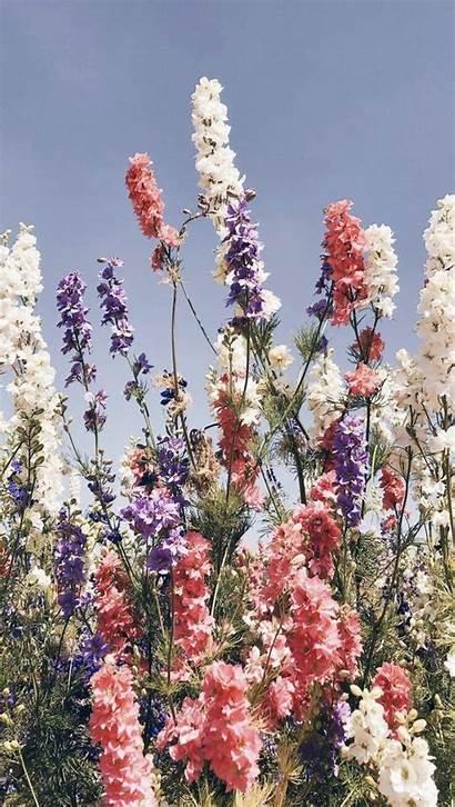 Aesthetic Flower Nature