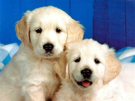 puppy pictures dogs images puppies