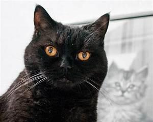 Mit Katze Umziehen : schwarze katze kater marliss joss ~ Michelbontemps.com Haus und Dekorationen