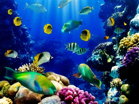 Live Animated Wallpaper For Pc Free - fresh 3d animated aquarium wallpaper free hd