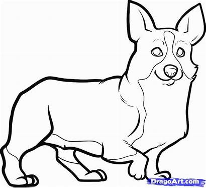 Corgi Draw Drawing Drawings Line Coloring Pages