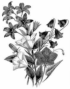 Group of Bellflowers ~ Free Vintage Floral Clip Art | Old ...