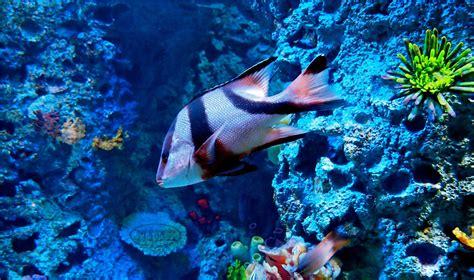 Aquatic Animals Wallpapers - aquatic animals wallpapers wallpaper cave