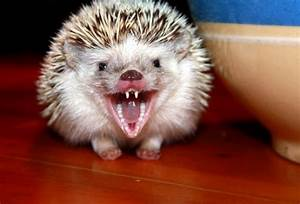 Freedawn Scientia: In the Life of a Hedgehog