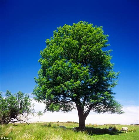 disease which killed 90 of danish ash trees has spread to
