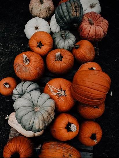 Pumpkin Fall Iphone Patch Market Backgrounds Farmers