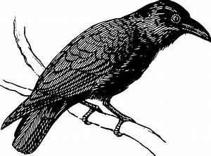 Clipart - Raven