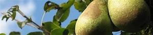 Quand Planter Un Pommier : planter un arbre fruitier nain le magazine gamm vert ~ Dallasstarsshop.com Idées de Décoration