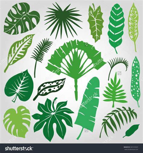 tropical leaf outline images  pinterest