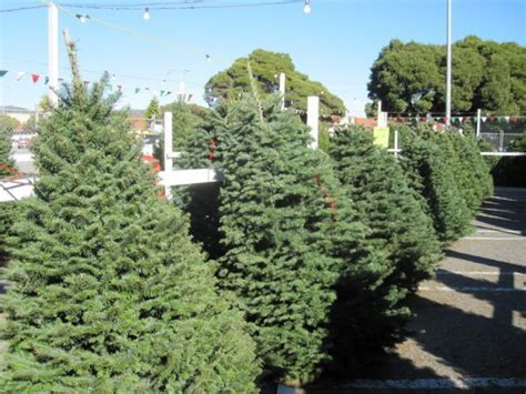 los angeles offers free christmas tree recycling patch