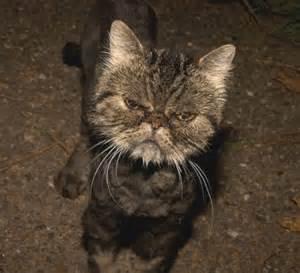 mad cats mad cats poc