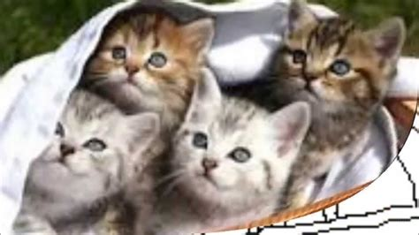katzen ausmalbilder youtube