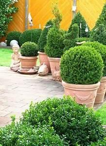 Hortensie Umpflanzen Im Topf : buchsbaum pflanzen pflege schneiden ~ Orissabook.com Haus und Dekorationen