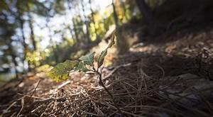 Avenir Et Bois : colloque sur la fili re for t bois et le changement climatique investir pour l 39 avenir alim 39 agri ~ Voncanada.com Idées de Décoration