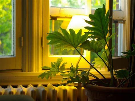 plantes d 39 intérieur pour l 39 ombre