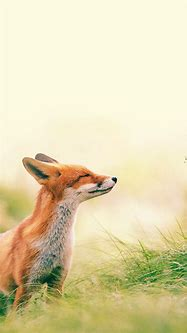 60 Cute Animals iPhone Wallpapers You Would Love to Download