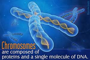 Chromosomes  The Functions Of The Carriers Of Genetic