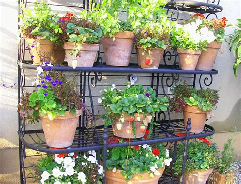 Garden Landscaping Ideas For Planting Herbs In Pots