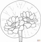 Coloring Lily Pages Pad Flower Water Popular sketch template