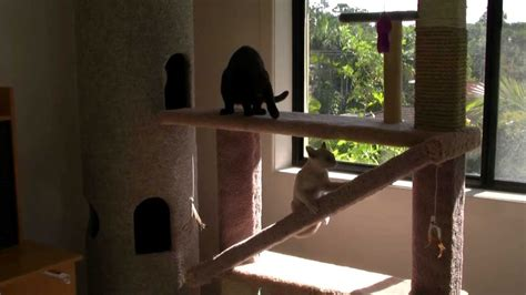how to get cats to stop scratching cat playground cat tower hd