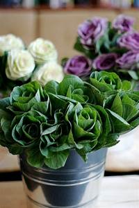 17 Best Images About Ornamental CabbageKale On Pinterest