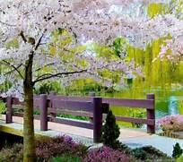 Beautiful Scenery Natu...Beautiful Nature Scenery Wallpapers