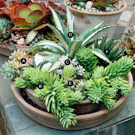 succulent dish garden succulent container garden plans