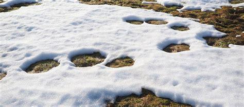 rasen kalken regen rasen kalken bei regen schnee bestes rasenpflege wetter
