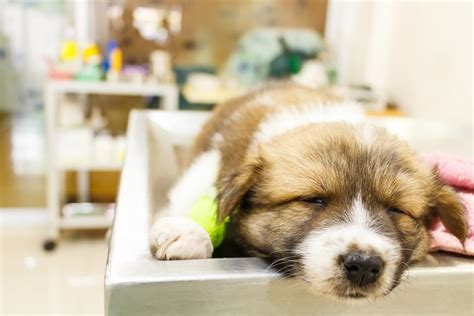 things pet stores don t want you to know
