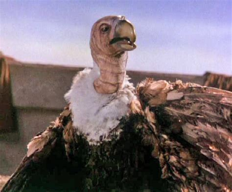 vulture muppet wiki fandom powered  wikia