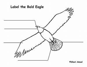 eagle bald labeling page With bald eagle diagram