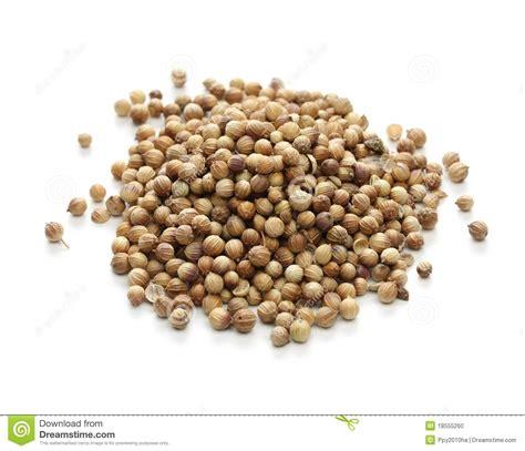 aroma indian cuisine semi di coriandolo spezia indiana fotografia stock