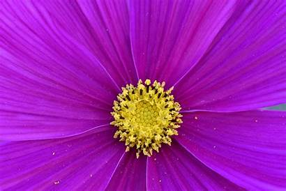 Macro Bright Flower Nature Flora Plant Blooming