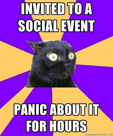 Awkward Cat Meme - 25 best ideas about awkward meme on pinterest it memes truth meme and laugh meme