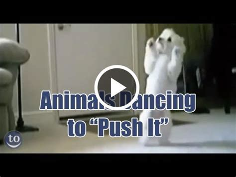 Animals Dancing to Push it