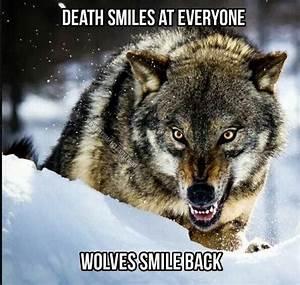 Pin de Corey em Wolf | Pinterest | Selvagens, Continue ...