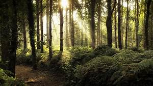 Nature, Forest, Sunlight, Trees, Wallpapers, Hd, Desktop