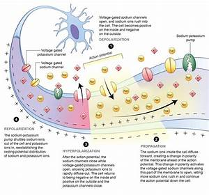 Scientific Illustration On Behance