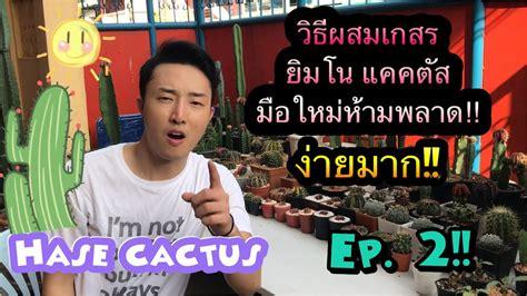 วิธีผสมเกสรยิมโน แคคตัส hase cactus ep.02 - YouTube