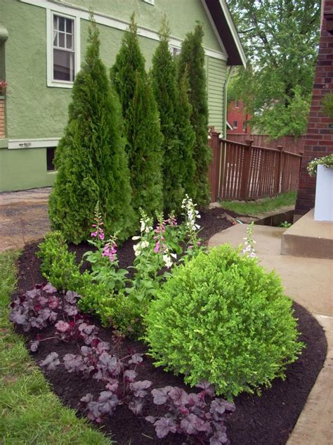 privacy planting ideas evergreen borders for landscaping hgtv