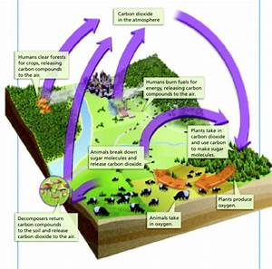 3 May 2011 The Carbon Cycle
