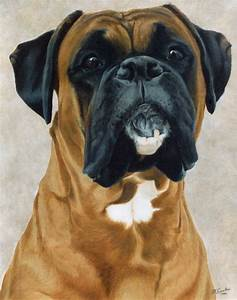 Boxer Archives - Page 2 of 3 - National Purebred Dog Day®